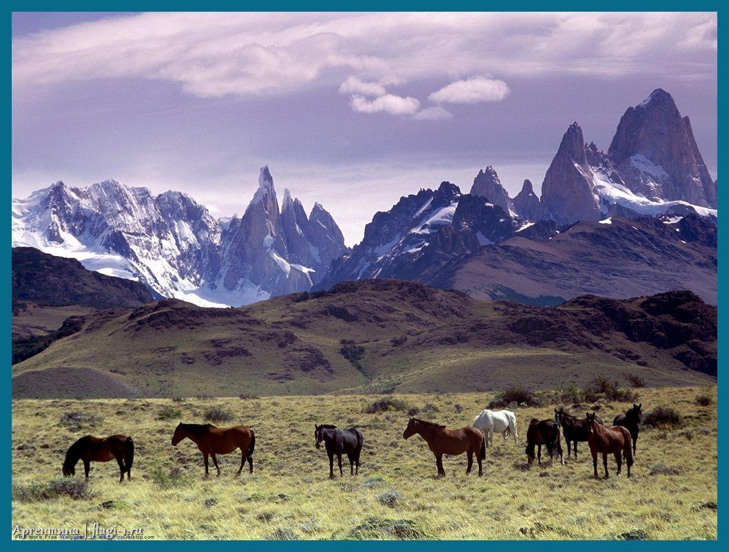 Argentina. Fotografii 016 - Флаги стран мира в HD! Цвета, значение и символика флагов - Аргентина   AR